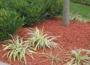 Mulch in landscape