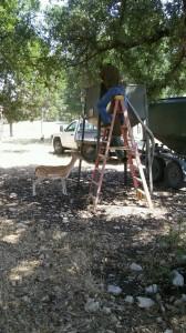 deer feeder