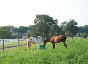 2-horses-drinking jug waterer