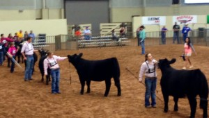 mclennan country junior livestock show