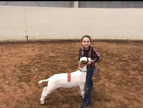 mclennan county junior livestock show